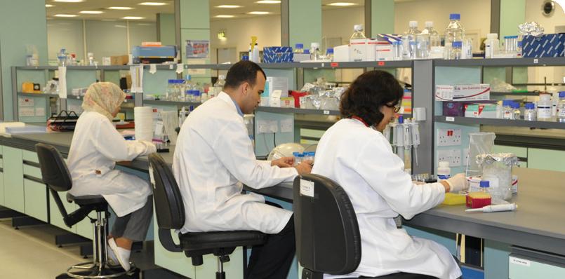 Essay on molecular biology lab